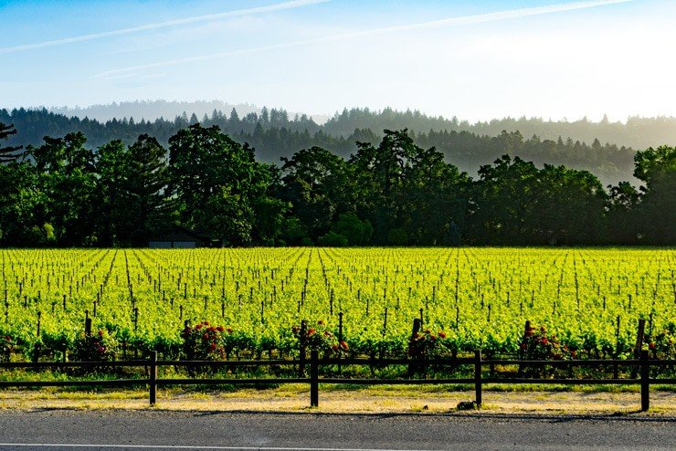 roling napa hills and vineyard
